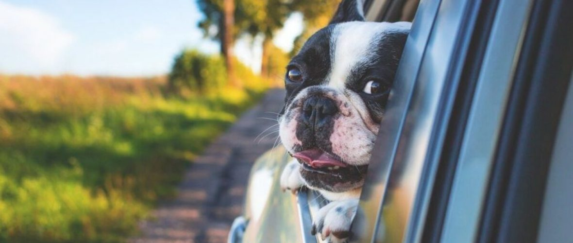 3 Reasons why you shouldn't let your dog or pet ride in the passenger seat